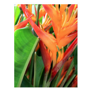 Brilliant Tropical Heliconia Florals Postcard
