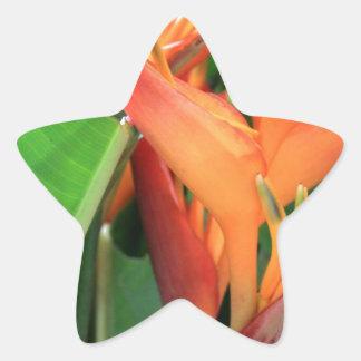 Brilliant Tropical Heliconia Florals Star Sticker