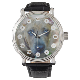Brindle Pit Bull Puppy Watch