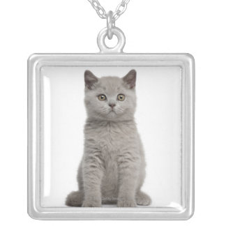 British Shorthair Kitten (10 weeks old) 2 Silver Plated Necklace
