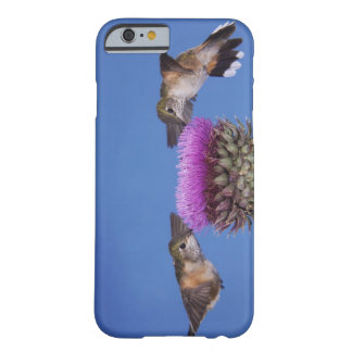 Broad-tailed Hummingbird, Selasphorus Barely There iPhone 6 Case