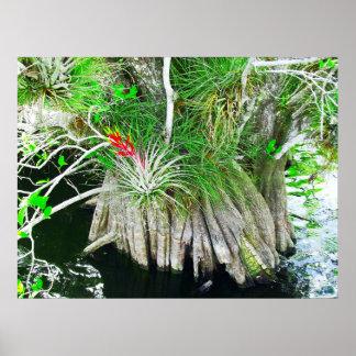 Bromeliad on Mangrove, Florida Everglades Poster