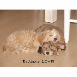 Brotherly Love Standing Photo Sculpture