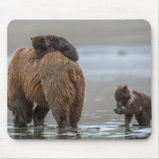 Brown bear and cubs mouse pad