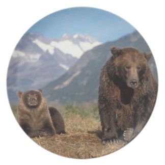 Brown bear, grizzly bear, sow with cub on plate
