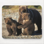 Brown bear, grizzly bear, sow with cubs on coast mouse mats