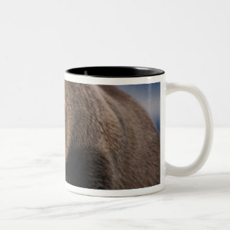Brown bear, grizzly bear, taking a nap, Katmai Two-Tone Coffee Mug