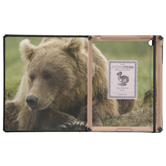 Brown bear, or Coastal Grizzly Bear, Ursus iPad Cases