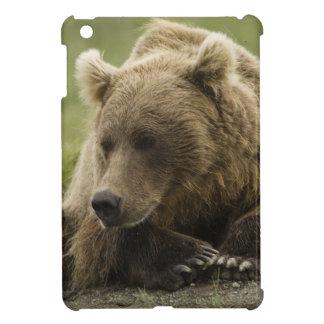Brown bear, or Coastal Grizzly Bear, Ursus iPad Mini Cases