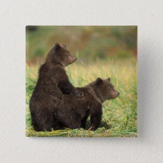 brown bear, Ursus arctos, grizzly bear, Ursus 2 15 Cm Square Badge