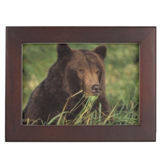 brown bear, Ursus arctos, grizzly bear, Ursus 7 Keepsake Box
