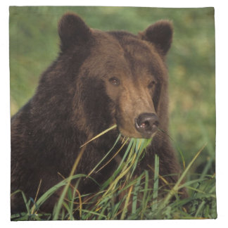 brown bear, Ursus arctos, grizzly bear, Ursus 7 Napkin