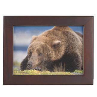 brown bear, Ursus arctos, grizzly bear, Ursus 8 Keepsake Box
