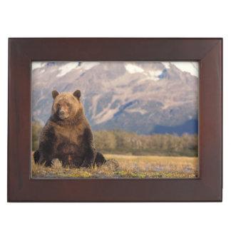 brown bear, Ursus arctos, grizzly bear, Ursus Keepsake Box