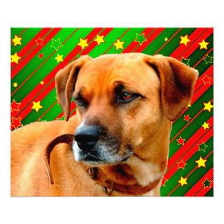 Brown Dog stars Red Yellow Green Christmas Photo