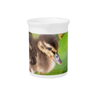 Brown duckling walking on water lily leaves pitcher
