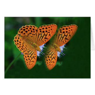 Brown Fritillary Butterfly photo greeting card