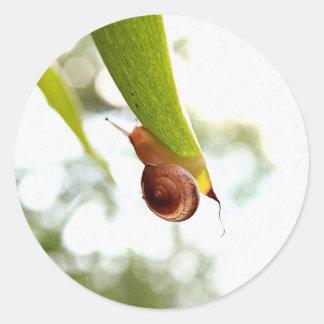 Brown Garden Snail Round Sticker
