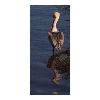Brown Pelican Birds Wildlife Animals Rack Card Design