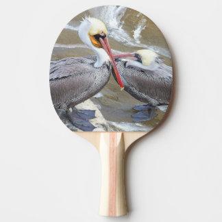 Brown Pelican Birds Wildlife Animals Sea Paddle