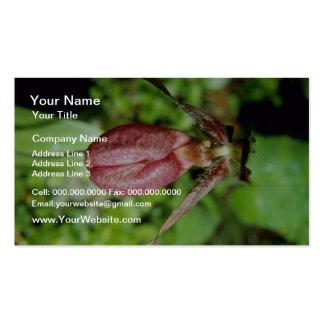 Brown Pink Lady's Slipper (Cypripedium Acaule) flo Business Cards