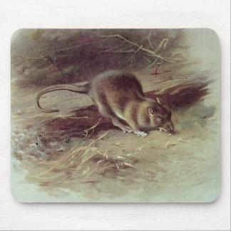 Brown Rat  1918 Mouse Pad