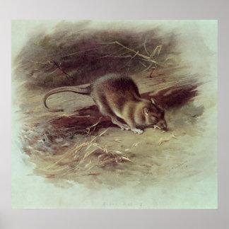 Brown Rat  1918 Poster