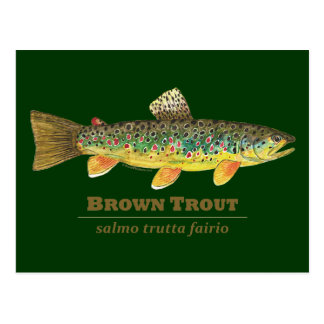 Brown Trout Latin Ichthyology Postcard