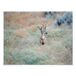 Buck Deer Photo Print