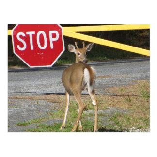 Buck Stop Postcard