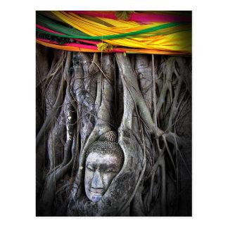Buddha And The Tree Buddhism Thailand Photography Postcard