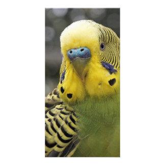 Budgie Bird Customised Photo Card