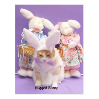 Bugged Bunny Postcard