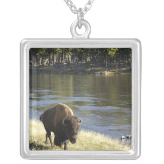 Bull Bison Walking Along River, Yellowstone Silver Plated Necklace