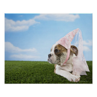Bull Dog puppy princess Poster