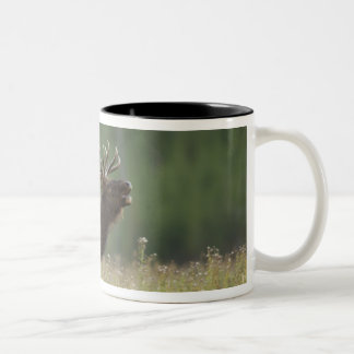 Bull Elk bugling, Yellowstone NP, Wyoming Two-Tone Coffee Mug