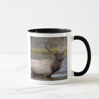 bull elk crossing river, Yellowstone NP, Wyoming Mug