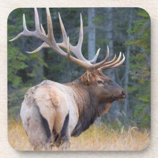 Bull Rocky Mountain Elk Coaster