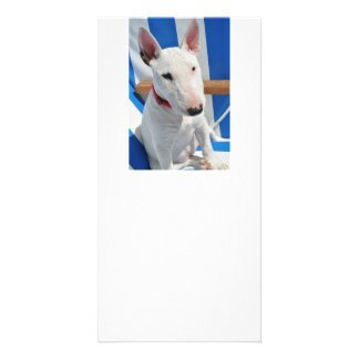 bull-terrier-sitting photo greeting card