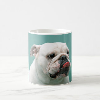 Bulldog, dog funny face sticking tongue out mug