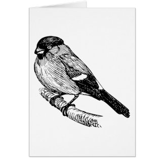 Bullfinch Bird Drawing Card
