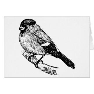 Bullfinch Bird Drawing Card