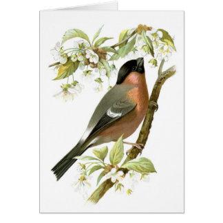 Bullfinch Card
