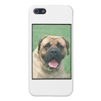 Bullmastiff iPhone 5 Cover