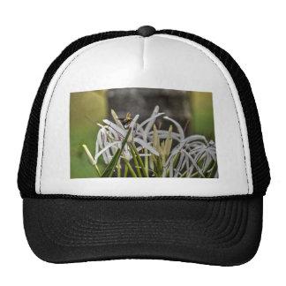 BUMBLE BEE RURAL QUEENSLAND AUSTRALIA CAP