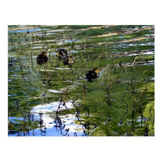 Bunch Of Baby Ducks Postcard