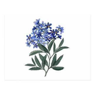 Bunch of Blue Blossoms Postcard