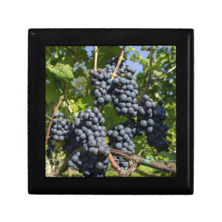 Bunch of blue grapes gift box
