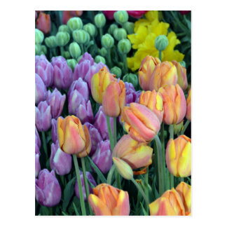 Bunch of colorful tulips postcard
