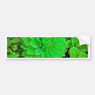 bunch of green dahlias bumper sticker